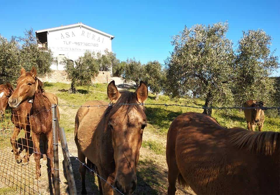 Caballos en la Casa Rural de Puerto Carretas